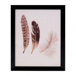 Obraz sømcasa Feathers, 25 x 30 cm