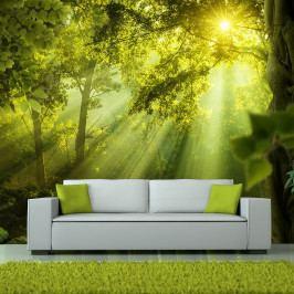 Velkoformátová tapeta Artgeist In a Secret Forest, 350x245cm