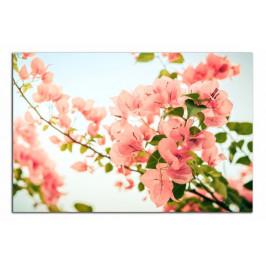 Obraz Detail květů C1021AO