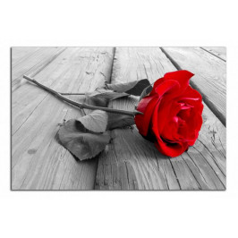 Obraz Červená růže C2040AO