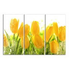 Obraz Žluté tulipány C3040BO