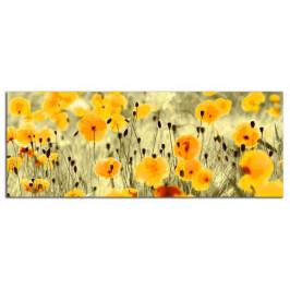 Obraz Žluté máky C3072AP