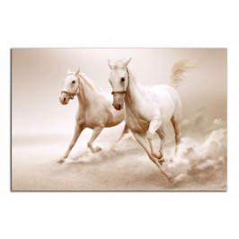 Obraz Koně C6072AO