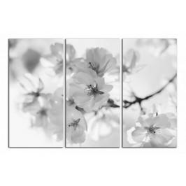 Obraz Květy C2094BO