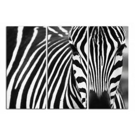 Obraz Zebra C2099BO