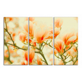 Obraz Oranžové magnolie C3192BO