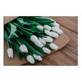 Obraz Bílé tulipány C1526AO
