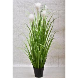 Harasim Dekorativní tráva v květináči 115 cm HR116341