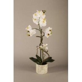 Orchidej v květináči 70cm Barva: bílá