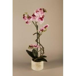 Orchidej v květináči 70cm Barva: růžová
