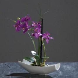 Orchidea v keramické misce 6 květů 27cm Barva: fialová