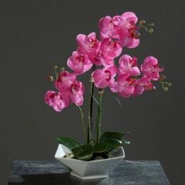 Orchidea do květníku Barva: růžová