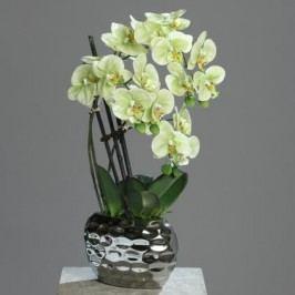 Orchidea květ zeleno-krémová 50cm Provedení: A