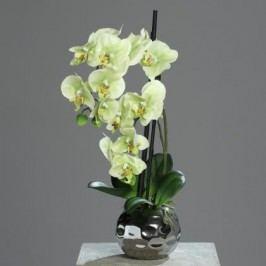 Orchidea květ zeleno-krémová 50cm Provedení: B