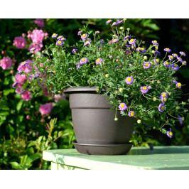 Plastia květináč Muškát hnědá - průměr 40 cm