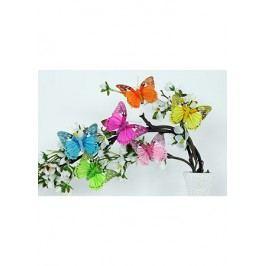 Motýl s klipem  sada 12 ks, mix 6 barev