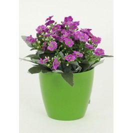Kalanchoe umělá v květináči, fialová  barva