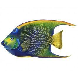 Samolepící dekorace Mořská ryba