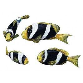 Samolepící dekorace Clownfish
