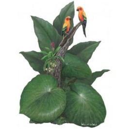 Samolepící dekorace  Papoušci