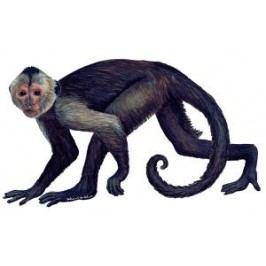 Samolepící dekorace  Opice - malpa kapucínská