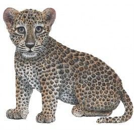 Samolepící dekorace  Leopard mládě