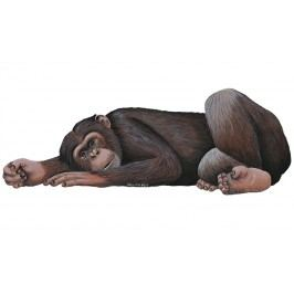 Samolepící dekorace  Šimpanz