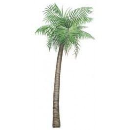 Samolepící dekorace  Palma velká