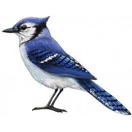 Samolepky - obrázky ptáci : Samolepící dekorace  Modrý ptáček