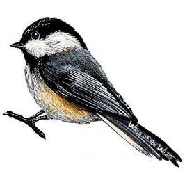 Samolepky - obrázky ptáci : Samolepící dekorace  Americký ptáček