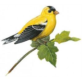 Samolepky - obrázky ptáci : Samolepící dekorace  Stehlík