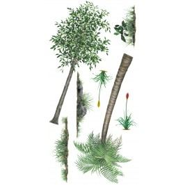 Rostliny – sada