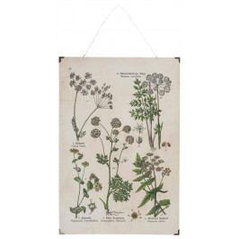 IB LAURSEN Botanický obraz Meadow Flower 40 x 60 cm, multi barva, dřevo, kov, papír