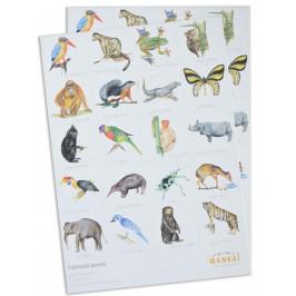 MANKAI Paper Papírové pexeso Indonesian Animals, multi barva, papír