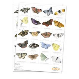 MANKAI Paper Papírové pexeso Motýli II, multi barva, papír