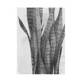 Plakát Plant 50x70 cm, šedá barva, černá barva, bílá barva, papír