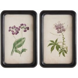 IB LAURSEN Botanický obrázek v rámečku Flower Typ A, černá barva, sklo, dřevo