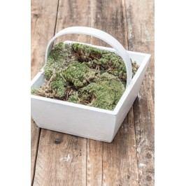 IB LAURSEN Dřevěný box s ouškem - bílý, bílá barva, dřevo