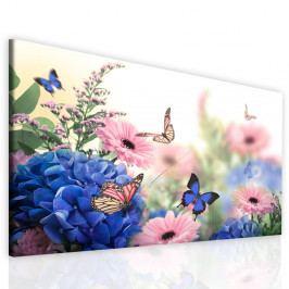InSmile Obraz motýlí život 150x90 cm