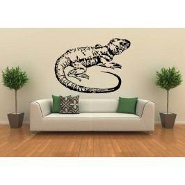 Agama (40 x 29 cm) -  Samolepka na zeď