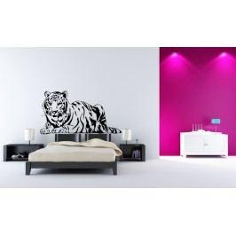 Ležící tygr (60 x 32 cm) -  Samolepka na zeď
