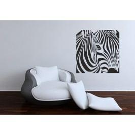 Zebra ve čtverci (60 x 60 cm) -  Dekorace na zeď