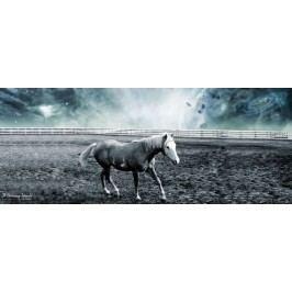 Kůň v ohradě (60 x 24 cm) -  Plakát na stěnu