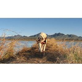 Pes u jezera (60 x 34 cm) -  Plakát
