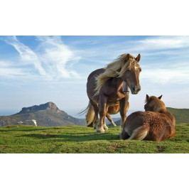 Koně (60 x 37 cm) -  Plakát