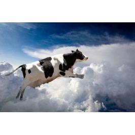 Letící kráva (60 x 40 cm) -  Plakát na zeď