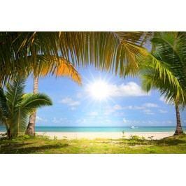 Palmy na pláži (60 x 40 cm) -  Plakát