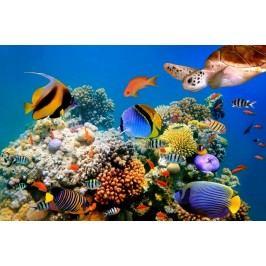 Podmořský svět (60 x 40 cm) -  Plakát na stěnu