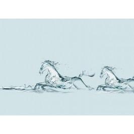 Vodní koně 2 (60 x 43 cm) -  Plakát na zeď