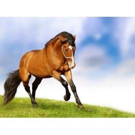 Běžící kůň (60 x 45 cm) -  Plakát